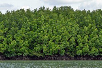 เที่ยวป่าชายเลนเชิงอนุรักษ์…พื้นที่แห่งความอุดมสมบูรณ์