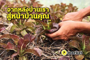 เกษตรอินทรีย์ ธรรมดาการ์เด้น - market