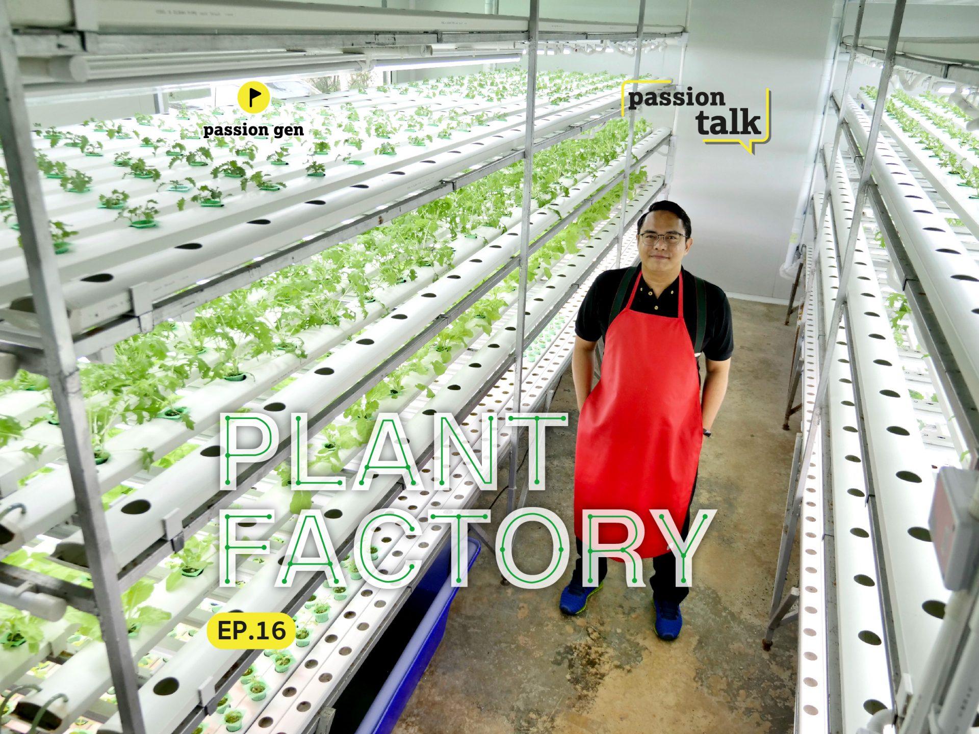 Plant factory ปลูกผักไฮโดรโปนิก ในพื้นที่น้อย